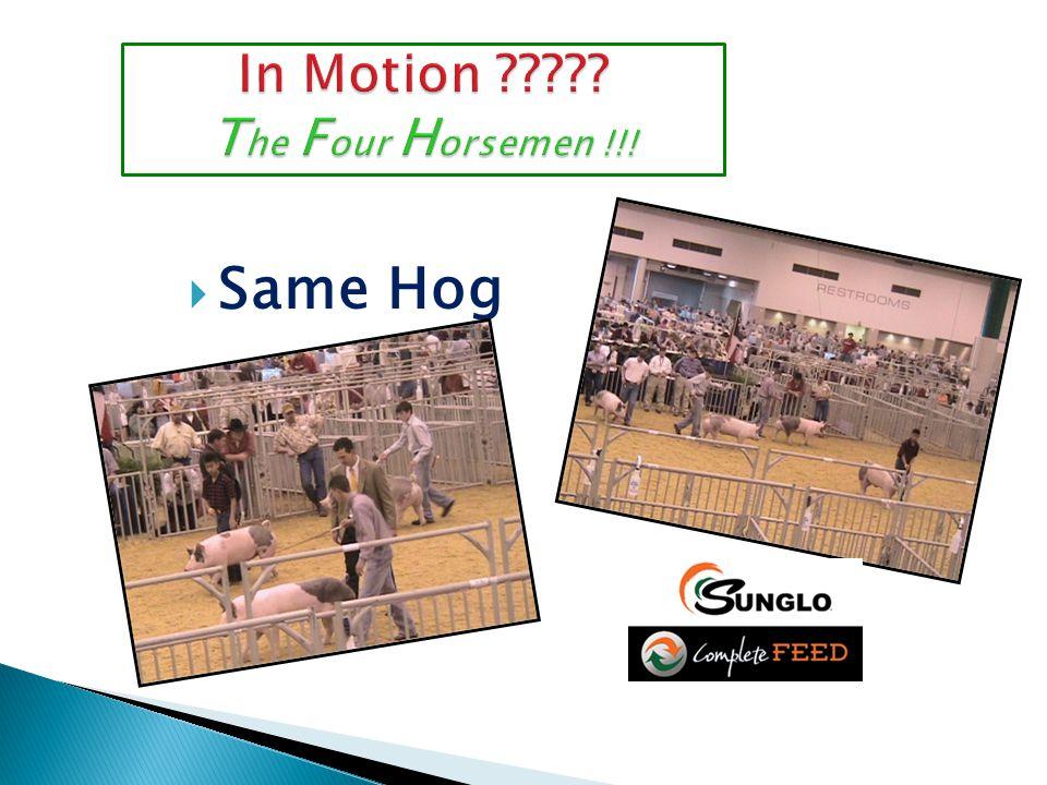  Same Hog