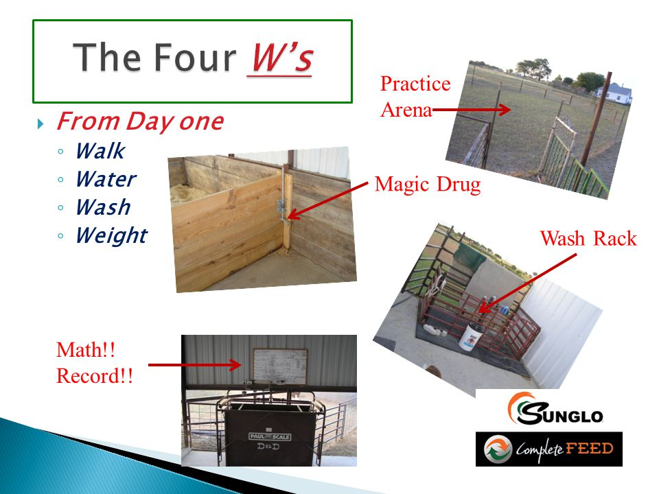 FFrom Day one ◦W◦Walk ◦W◦Water ◦W◦Wash ◦W◦Weight Practice Arena Magic Drug Wash Rack Math!! Record!!