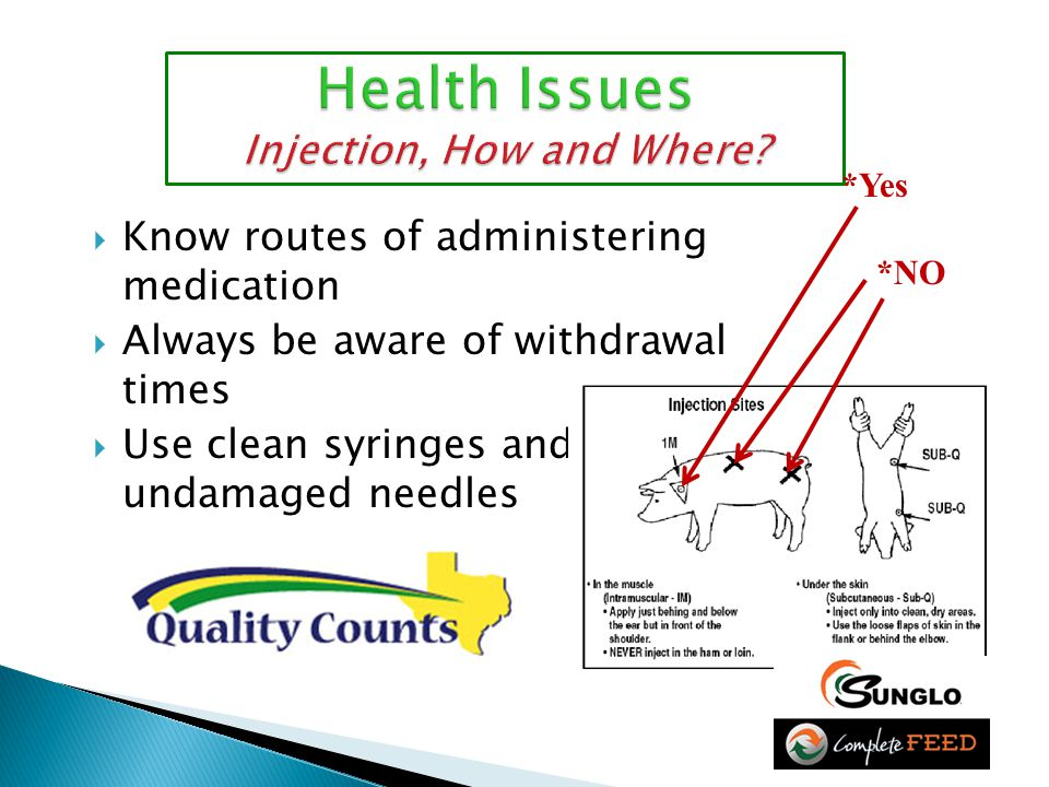  Know routes of administering medication  Always be aware of withdrawal times  Use clean syringes and undamaged needles *Yes *NO