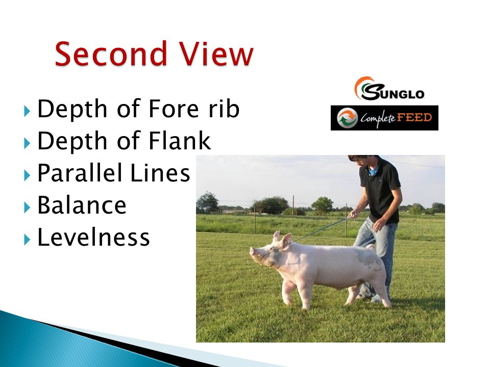 Depth of Fore rib  Depth of Flank  Parallel Lines  Balance  Levelness
