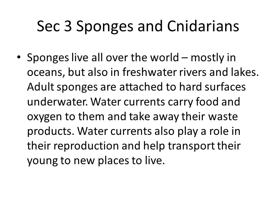 Sec 3 Sponges and Cnidarians Sponges live all over the world – mostly in oceans, but also in freshwater rivers and lakes. Adult sponges are attached t