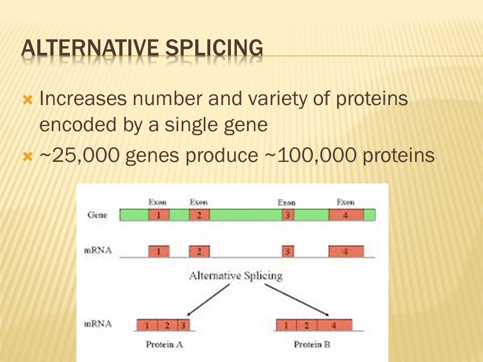  Increases number and variety of proteins encoded by a single gene  ~25,000 genes produce ~100,000 proteins