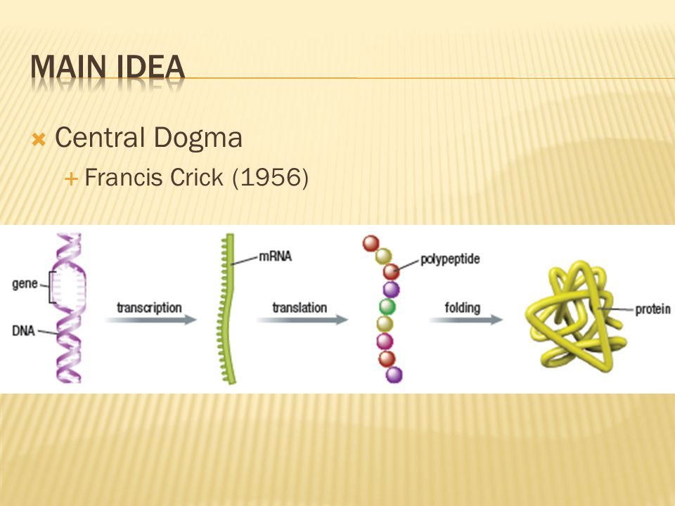  Central Dogma  Francis Crick (1956)