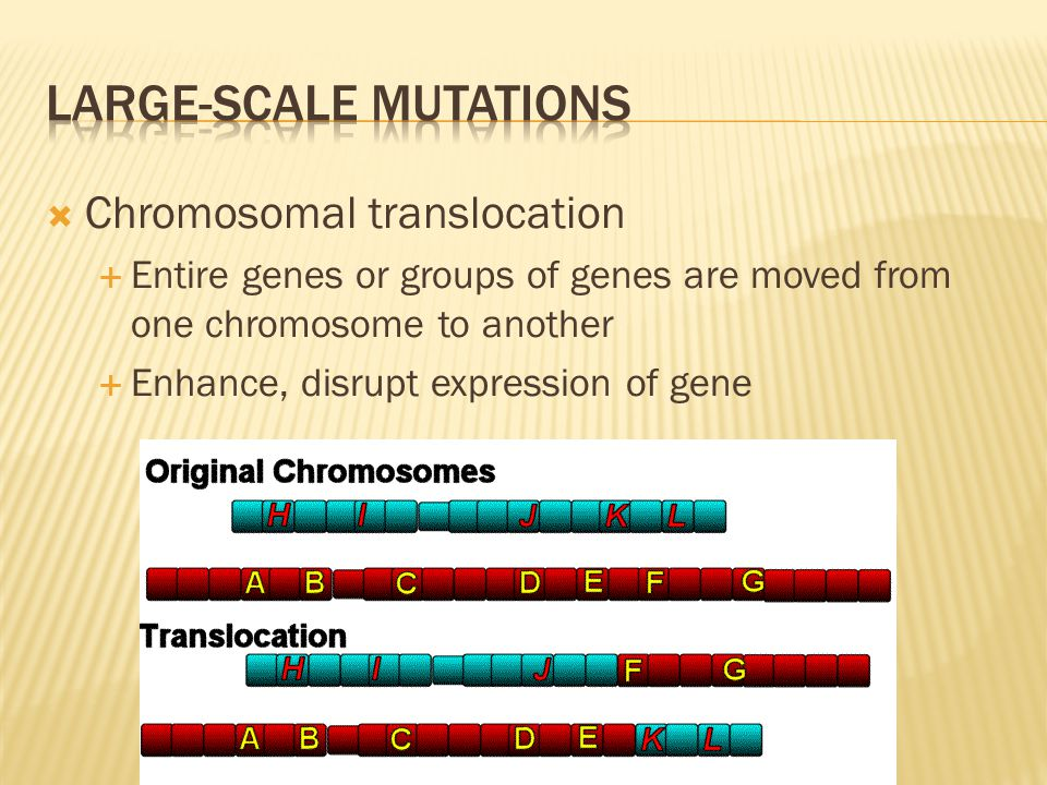  Chromosomal translocation  Entire genes or groups of genes are moved from one chromosome to another  Enhance, disrupt expression of gene