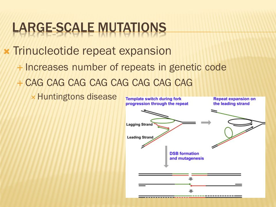  Trinucleotide repeat expansion  Increases number of repeats in genetic code  CAG CAG CAG CAG CAG CAG CAG CAG  Huntingtons disease