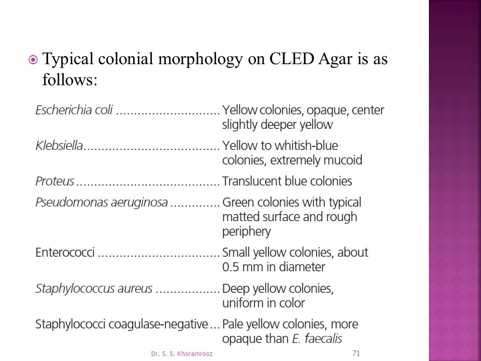  Typical colonial morphology on CLED Agar is as follows: 71 Dr. S. S. Khoramrooz