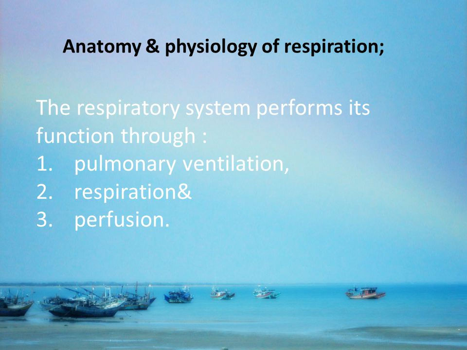 The respiratory system performs its function through : 1.pulmonary ventilation, 2.respiration& 3.perfusion. Anatomy & physiology of respiration;