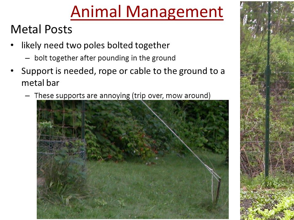 Metal Posts likely need two poles bolted together – bolt together after pounding in the ground Support is needed, rope or cable to the ground to a metal bar – These supports are annoying (trip over, mow around)