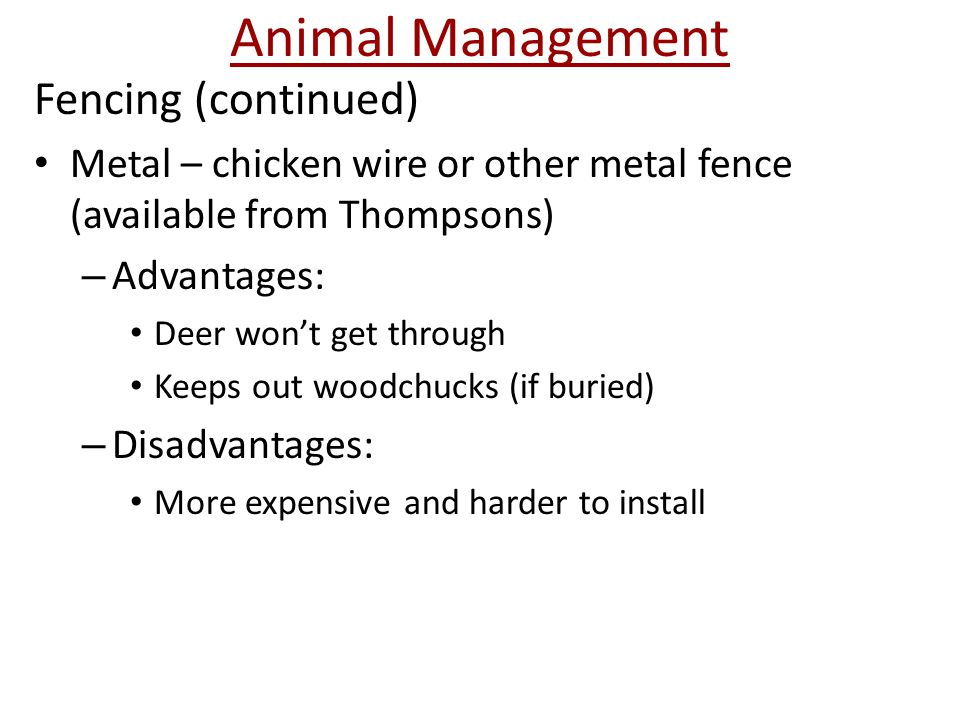 Animal Management Fencing (continued) Metal – chicken wire or other metal fence (available from Thompsons) – Advantages: Deer won't get through Keeps out woodchucks (if buried) – Disadvantages: More expensive and harder to install