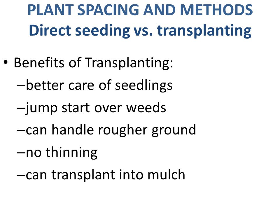 PLANT SPACING AND METHODS Direct seeding vs.