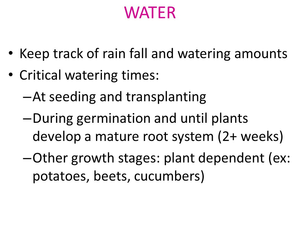 Keep track of rain fall and watering amounts Critical watering times: – At seeding and transplanting – During germination and until plants develop a mature root system (2+ weeks) – Other growth stages: plant dependent (ex: potatoes, beets, cucumbers) WATER