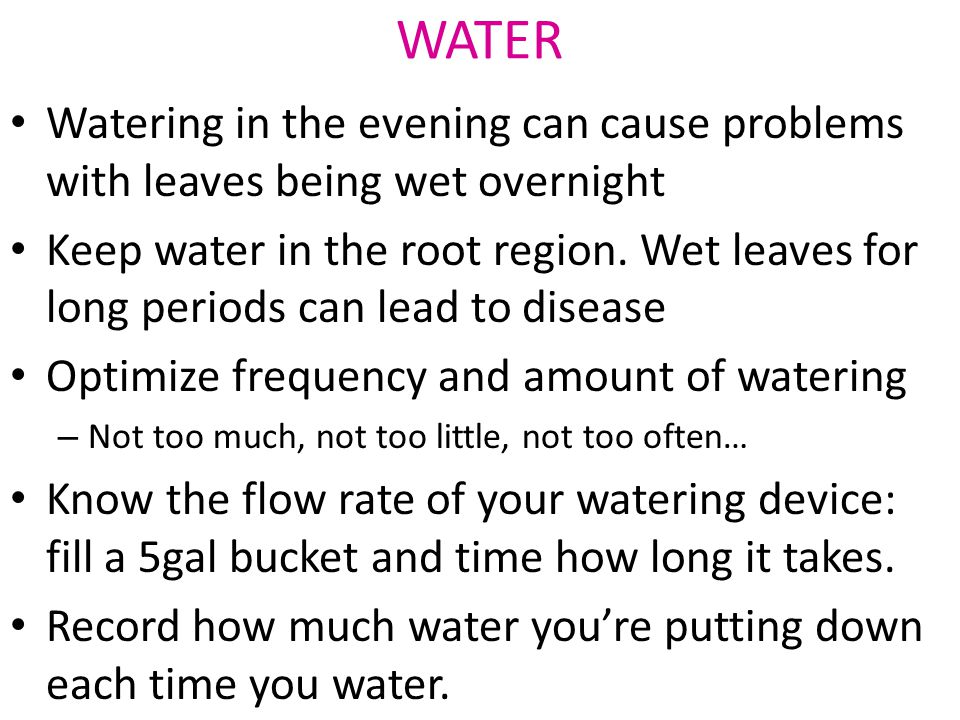 Watering in the evening can cause problems with leaves being wet overnight Keep water in the root region.
