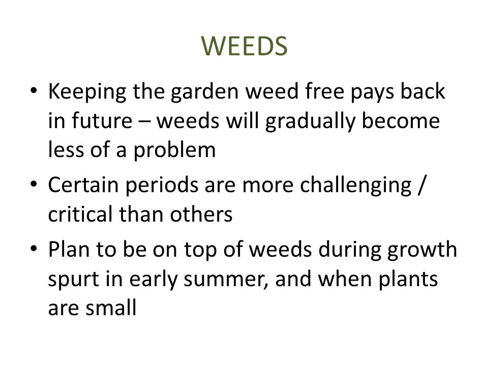 WEEDS Keeping the garden weed free pays back in future – weeds will gradually become less of a problem Certain periods are more challenging / critical than others Plan to be on top of weeds during growth spurt in early summer, and when plants are small