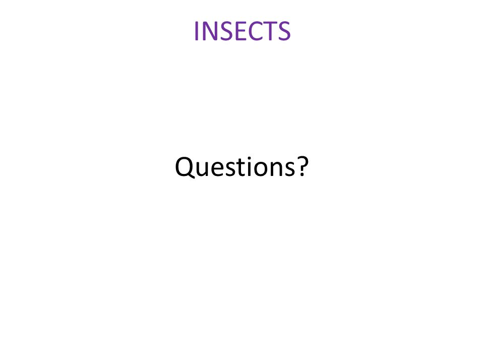 Questions INSECTS
