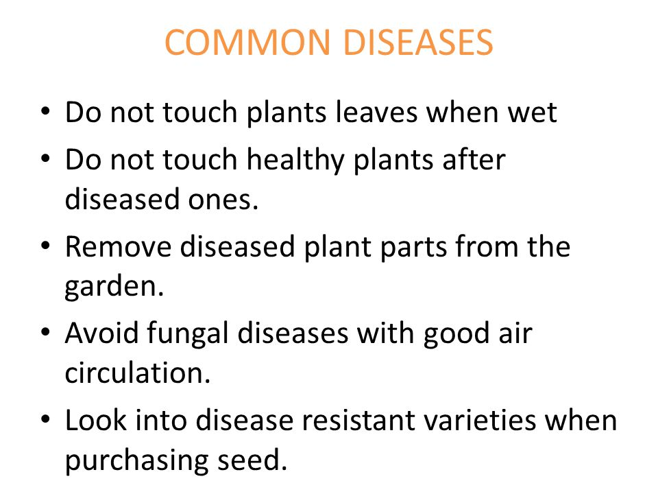 COMMON DISEASES Do not touch plants leaves when wet Do not touch healthy plants after diseased ones.