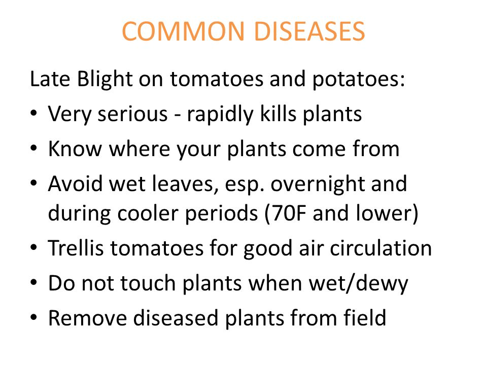 COMMON DISEASES Late Blight on tomatoes and potatoes: Very serious - rapidly kills plants Know where your plants come from Avoid wet leaves, esp.