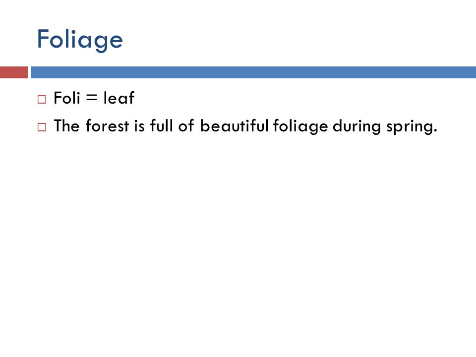 Foliage  Foli = leaf  The forest is full of beautiful foliage during spring.