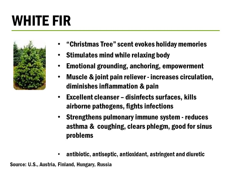 "WHITE FIR ""Christmas Tree"" scent evokes holiday memories Stimulates mind while relaxing body Emotional grounding, anchoring, empowerment Muscle & join"