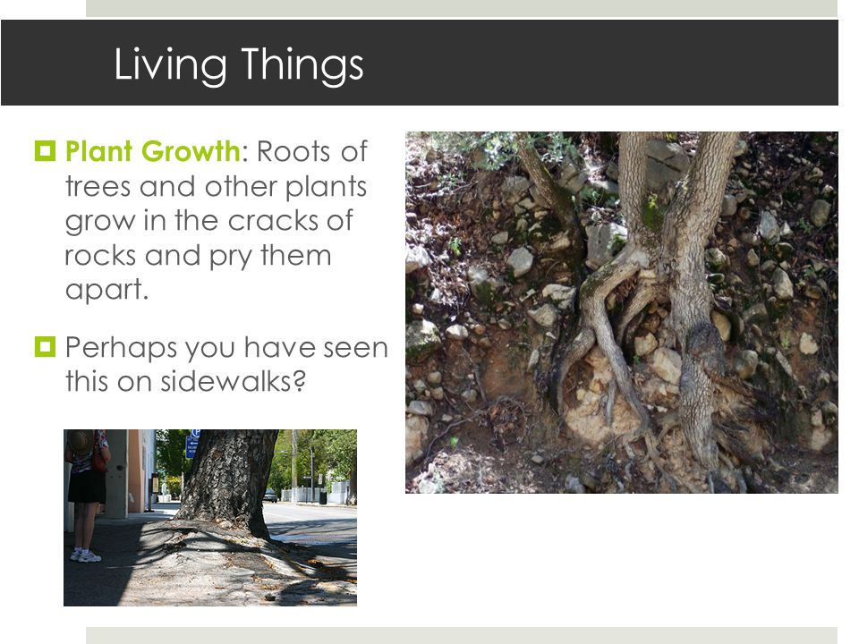 Living Things  Plant Growth : Roots of trees and other plants grow in the cracks of rocks and pry them apart.