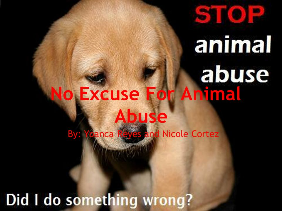 No Excuse For Animal Abuse By: Yoanca Reyes and Nicole Cortez