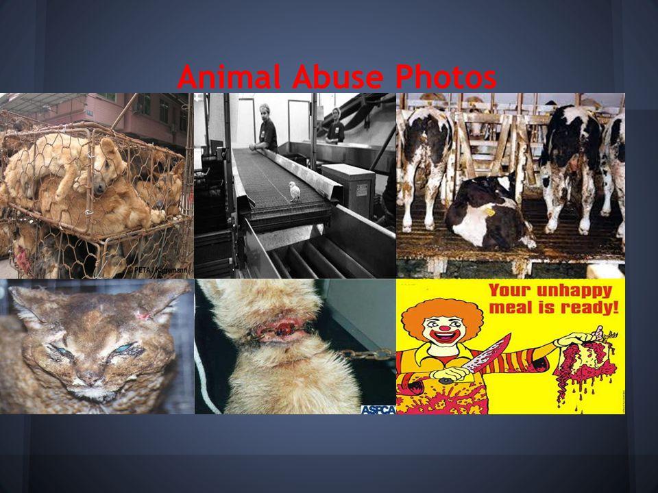 Animal Abuse Photos