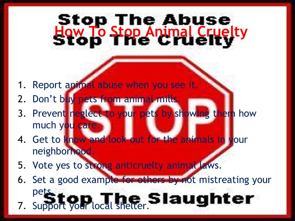 How To Stop Animal Cruelty 1.Report animal abuse when you see it.