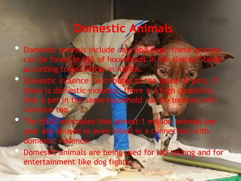Domestic Animals Domestic animals include cats and dogs, these animals can be found in 63% of households in the United States according to an article in ASPCA.