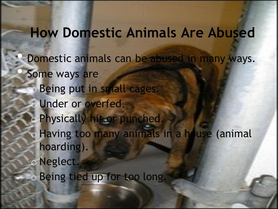 How Domestic Animals Are Abused (Continued) In some places, dogs are skinned alive for their fur.