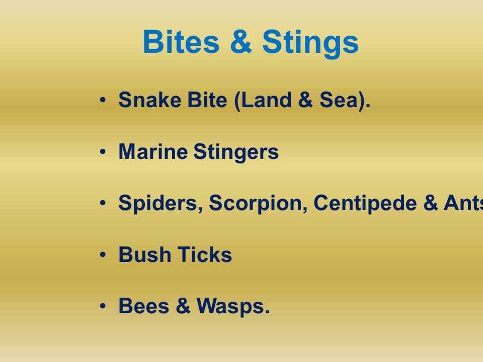 Bites & Stings Snake Bite (Land & Sea). Marine Stingers Spiders, Scorpion, Centipede & Ants Bush Ticks Bees & Wasps.