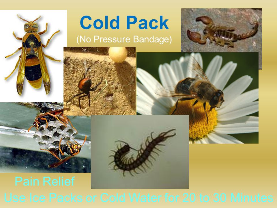 Cold Pack (No Pressure Bandage) Use Ice Packs or Cold Water for 20 to 30 Minutes Pain Relief