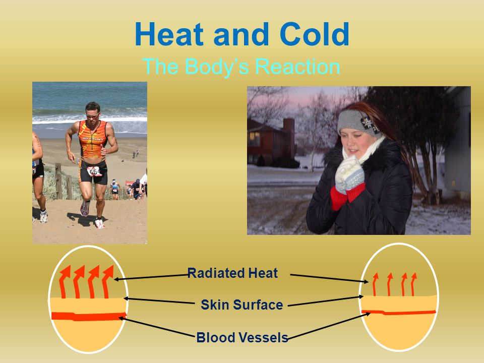 Heat and Cold Blood Vessels Radiated Heat Skin Surface The Body's Reaction