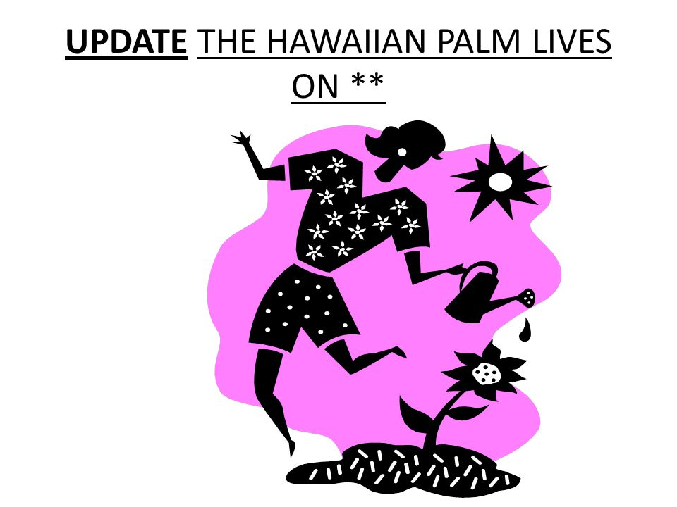 UPDATE THE HAWAIIAN PALM LIVES ON **