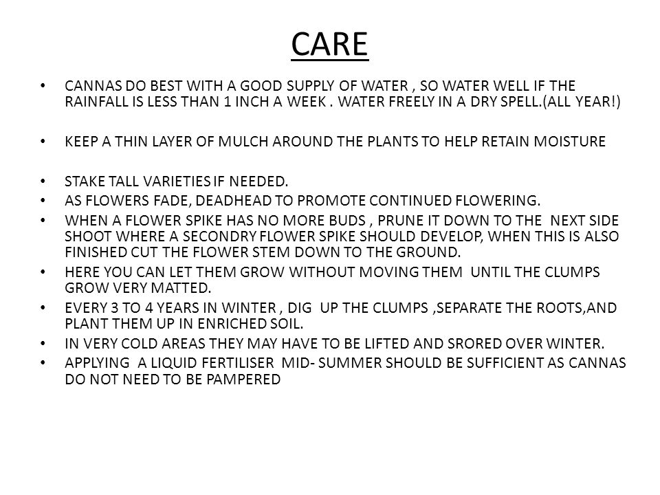 CARE CANNAS DO BEST WITH A GOOD SUPPLY OF WATER, SO WATER WELL IF THE RAINFALL IS LESS THAN 1 INCH A WEEK.