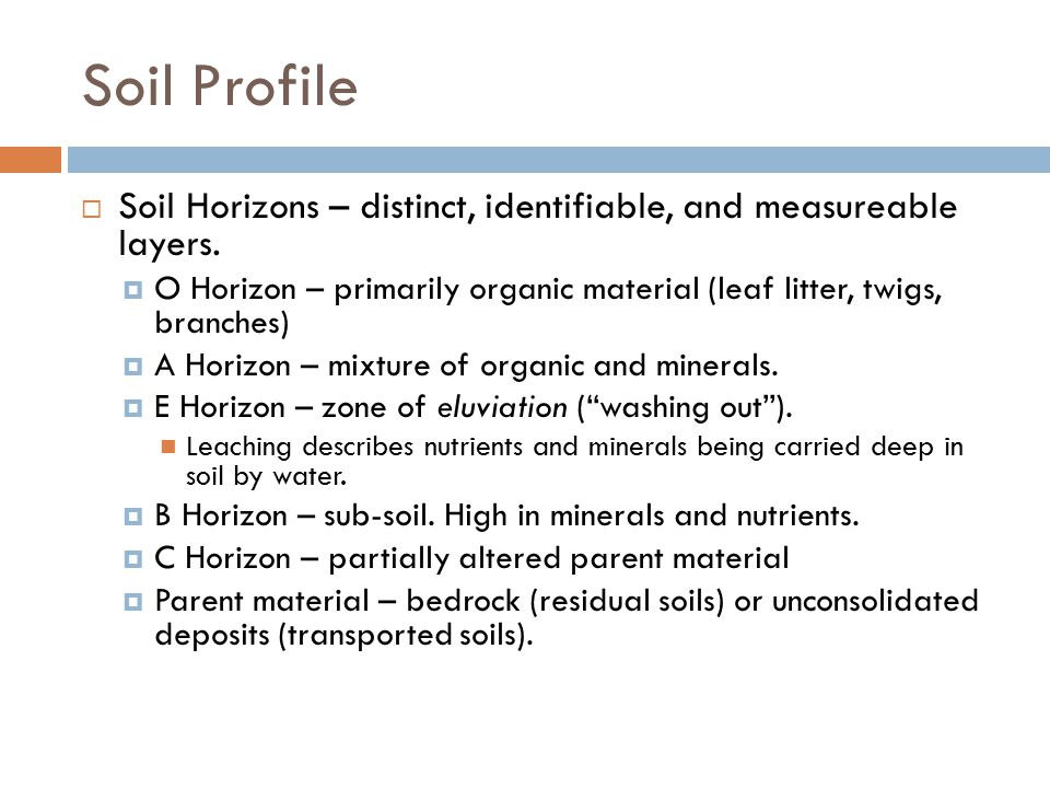 Soil Profile  Soil Horizons – distinct, identifiable, and measureable layers.  O Horizon – primarily organic material (leaf litter, twigs, branches)