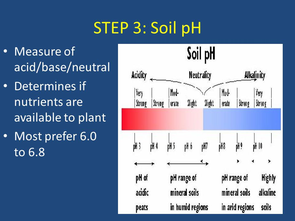 STEP 3: Soil pH Measure of acid/base/neutral Determines if nutrients are available to plant Most prefer 6.0 to 6.8