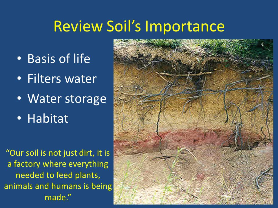 Review Soil's Importance Basis of life Filters water Water storage Habitat Our soil is not just dirt, it is a factory where everything needed to feed plants, animals and humans is being made.