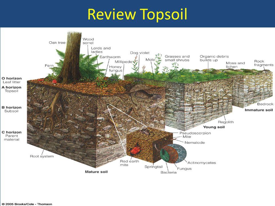 Review Topsoil
