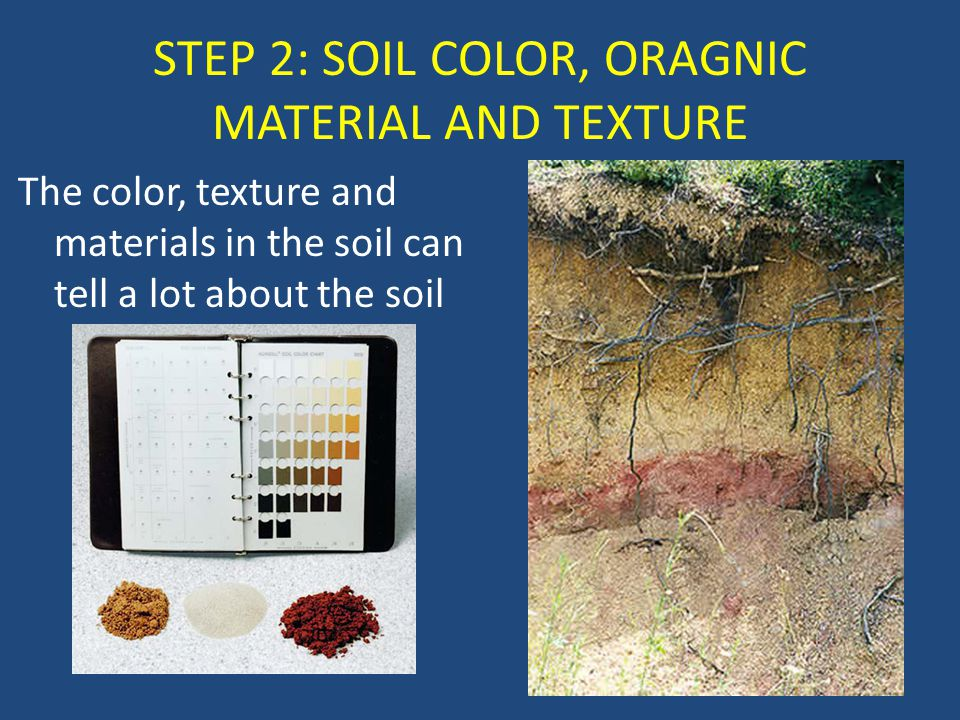 STEP 2: SOIL COLOR, ORAGNIC MATERIAL AND TEXTURE The color, texture and materials in the soil can tell a lot about the soil