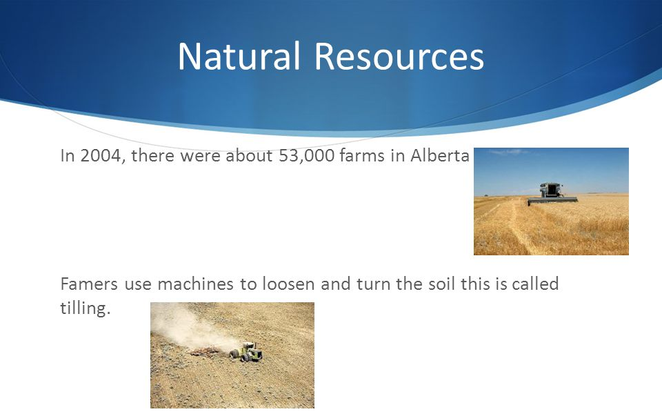 Natural Resources In 2004, there were about 53,000 farms in Alberta Famers use machines to loosen and turn the soil this is called tilling.