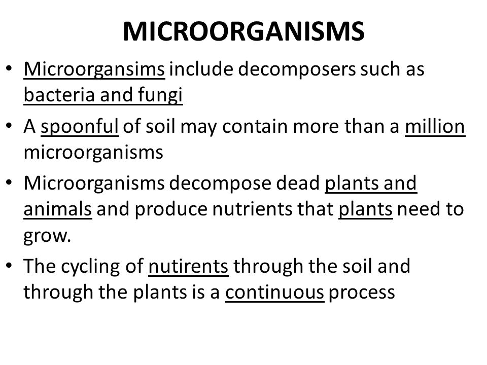 PLANTS Plants such as trees and grasses provide most of the organic matter that breaks down to form humus. Ex. – Trees add organic matter in soil when