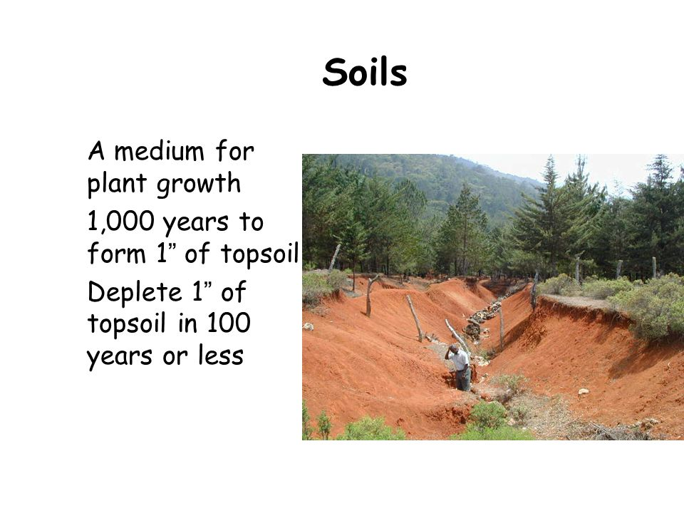 """Soils A medium for plant growth 1,000 years to form 1 """" of topsoil Deplete 1 """" of topsoil in 100 years or less"""