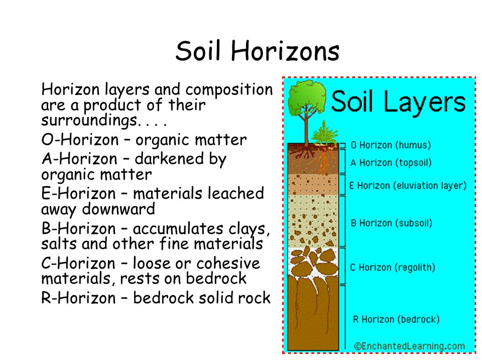 Soil Horizons Horizon layers and composition are a product of their surroundings.... O-Horizon – organic matter A-Horizon – darkened by organic matter