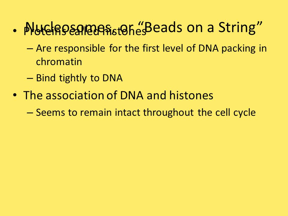 In electron micrographs – Unfolded chromatin has the appearance of beads on a string Each bead is a nucleosome – The basic unit of DNA packing Figure 19.2 a 2 nm 10 nm DNA double helix Histone tails His- tones Linker DNA ( string ) Nucleosome ( bad ) Histone H1 (a) Nucleosomes (10-nm fiber)