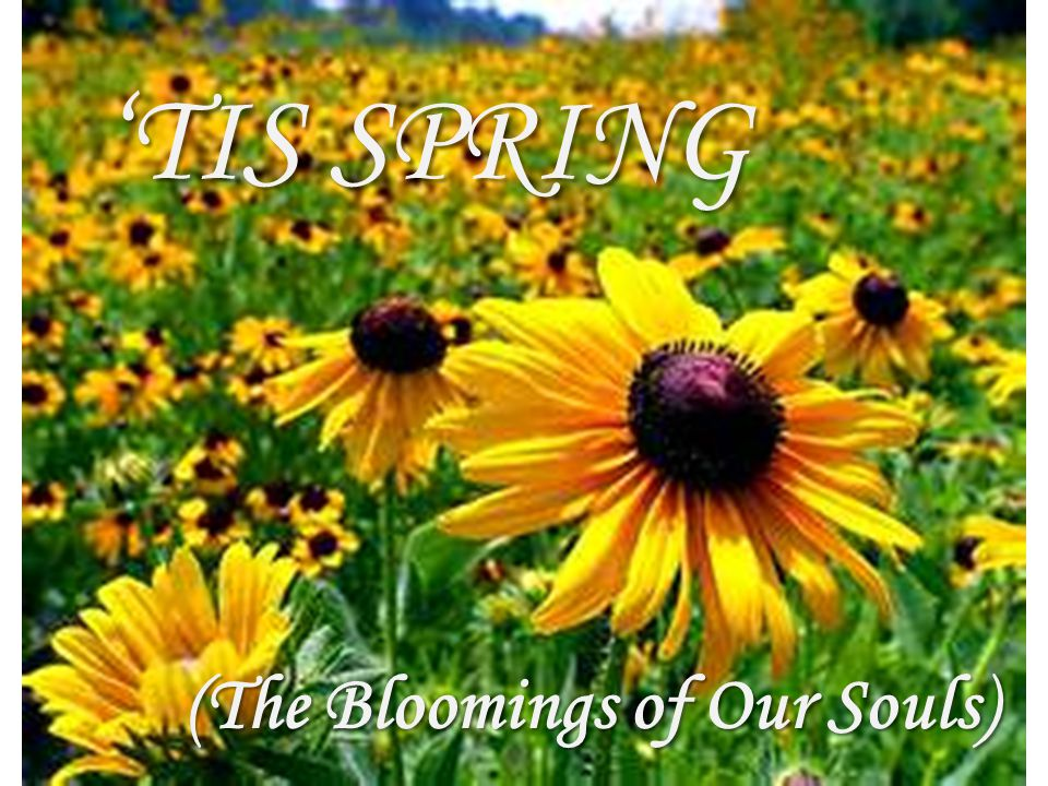 'TIS SPRING (The Bloomings of Our Souls)