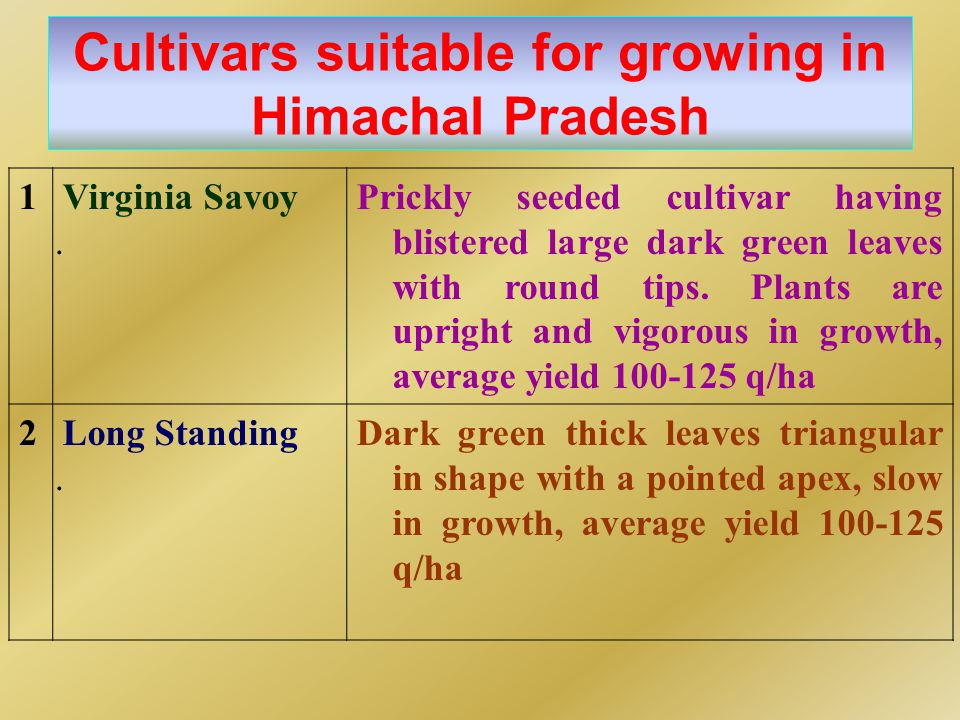 Cultivars suitable for growing in Himachal Pradesh 1.1. Virginia SavoyPrickly seeded cultivar having blistered large dark green leaves with round tips