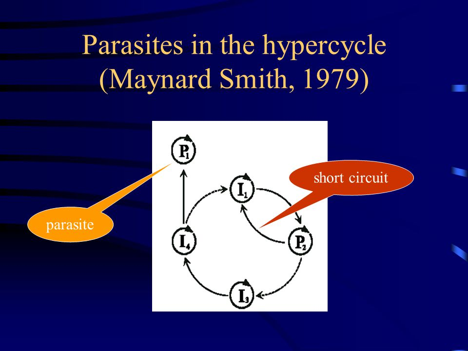 Parasites in the hypercycle (Maynard Smith, 1979) parasite short circuit