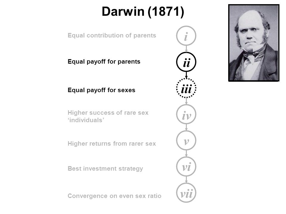 i ii iii iv v vi vii Equal contribution of parents Equal payoff for parents Equal payoff for sexes Higher success of rare sex 'individuals' Higher returns from rarer sex Best investment strategy Convergence on even sex ratio Darwin (1871)