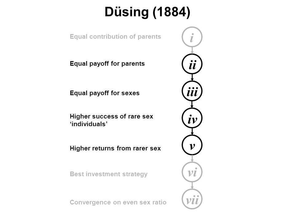 i ii iii iv v vi vii Equal contribution of parents Equal payoff for parents Equal payoff for sexes Higher success of rare sex 'individuals' Higher returns from rarer sex Best investment strategy Convergence on even sex ratio Düsing (1884)