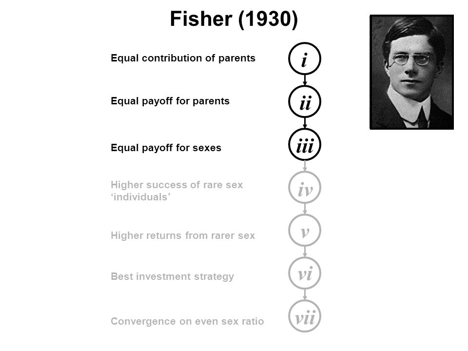 i ii iii iv v vi vii Equal contribution of parents Equal payoff for parents Equal payoff for sexes Higher success of rare sex 'individuals' Higher returns from rarer sex Best investment strategy Convergence on even sex ratio Fisher (1930)