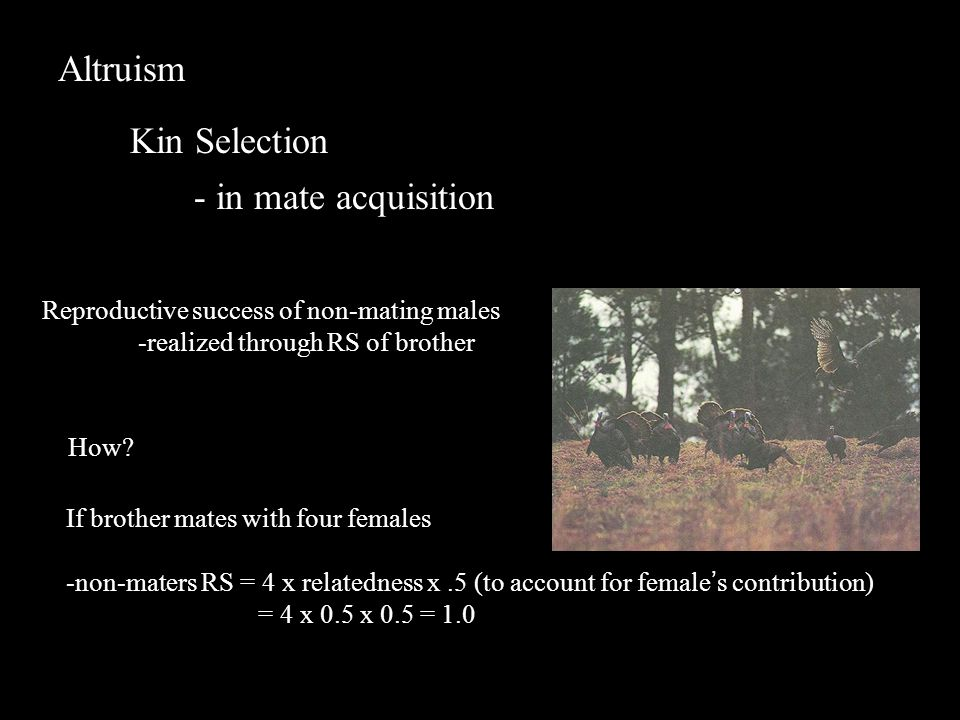 Altruism Kin Selection - in mate acquisition Reproductive success of non-mating males -realized through RS of brother How.